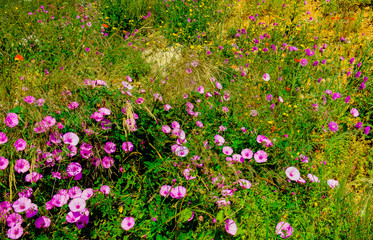 Close up on diverse variety of flowers in a Mediterranean meadow in spring, Calanque National Park, Marseille France