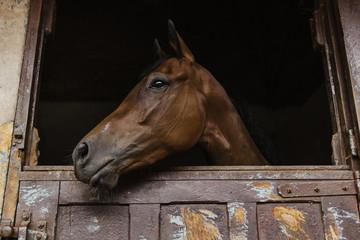 Cavalo de corrida.