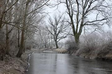 winter in the park. river landscape