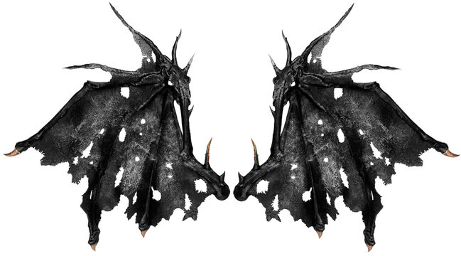 Close up on dragon wings isolated on white background. Cut out.
