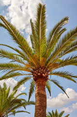 View of a palm tree against the sky