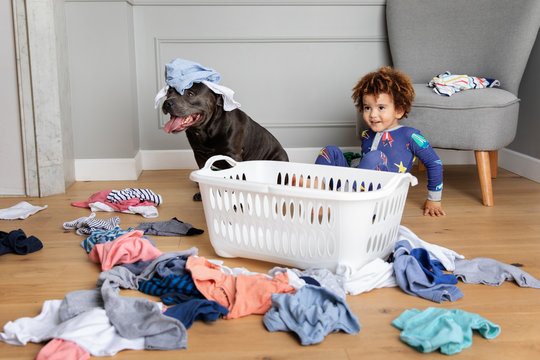 Boy and dog making mess with laundry