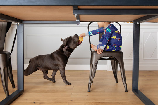 Boy gives a cookie to his dog under the table