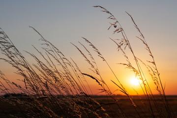 Couché de soleil à travers les herbes