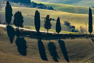 Cypress trees shadows along a scenic Tuscan countryside road near Monticchiello, Siena, Italy