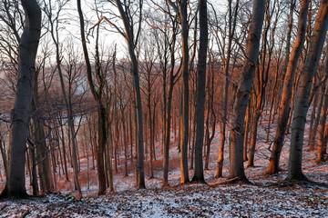 Bäume und Wald im Winter