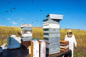 Beekeepr in a Bee Yard