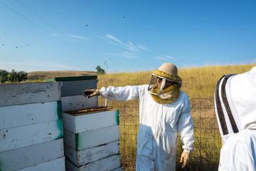 Beekeeper Working in a Bee Yard