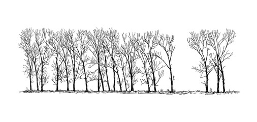 Cartoon doodle drawing illustration of group or alley of broadleaved or deciduous poplar tree on the far horizon in winter.