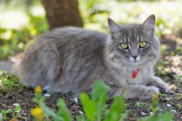 Gray street cat closeup at spring
