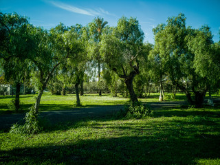 View of very green trees and grass in a park of Puerto de Sagunto