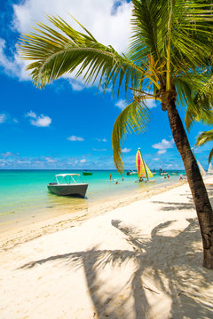 Trou aux biches, Mauritius. Tropical exotic beach with palms trees and clear blue water.