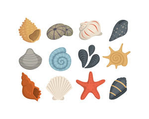 Sea shell vector icons in cartoon style. Set of clam mollusc. Ocean cockleshell.