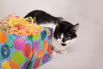 Black and white kitty cat sitting by box wrapped in happy birthday ballon wrapping paper unsure look