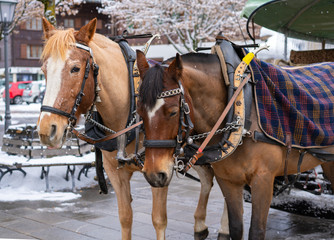 Horse harnessed to a carriage in Gstaad, Switzerland
