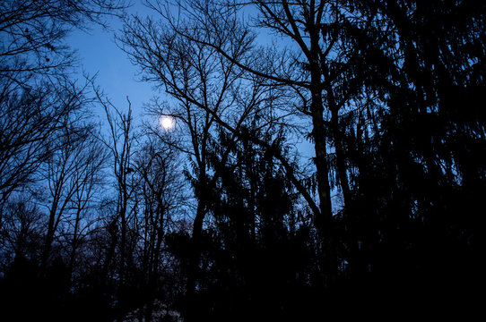 full moon above the forest in winter