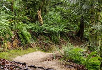 Forested path in Portland, Oregon's Forest Path.