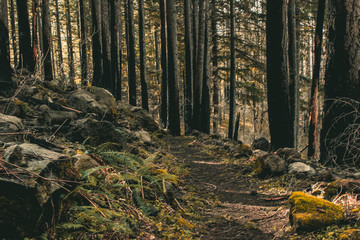 A forest path in Oregon's Columbia River Gorge.