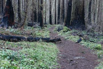 A forest path outside of Portland, Oregon.