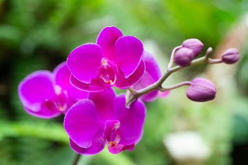 Bright purple Orchids budding in the middle of the garden at shallow depth of field with a macro lens.