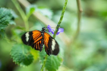 Orange and black butterfly with a purple flower in nature.