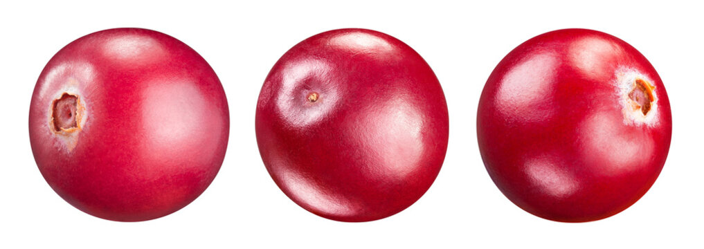 Cranberry isolated Clipping Path