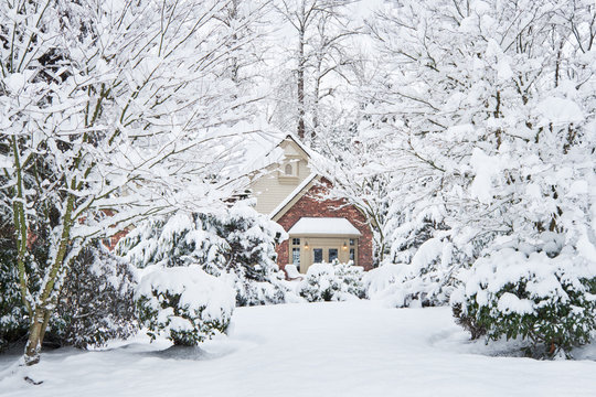 Suburban house surrounded by snow-laden trees in a winter snow storm