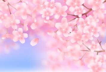 Fototapeta 桜 春 花 背景