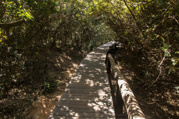 Wooden bridge footpath by the beach leading into thick bush growth