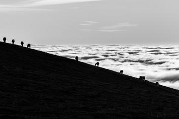 Horses silhouettes on a mountain over a sea of fog