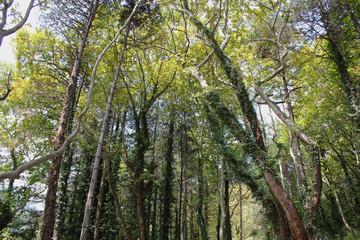 Dense Forest next to the Pozar Thermal Baths Aridaia Greece