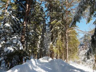 Waldlandschaft im Winter. Loipe zwischen Kreuth und Scharling in tegernseer tal. Die Heide an der Weissach entlang. Schneebedeckter Rundweg zwischen Tannen und Kiefer