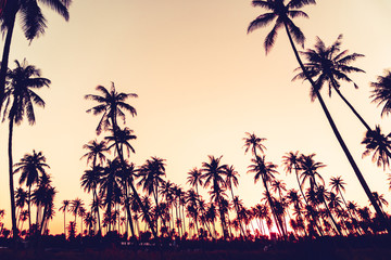 Tropical palm coconut trees on sunset sky nature background.