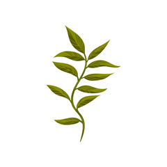 Tree twig with green foliage. Small branch with fresh leaves. Nature and botany theme. Flat vector design