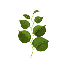 Small fresh twig with dark green leaves. Branch with foliage. Nature theme. Detailed flat vector design