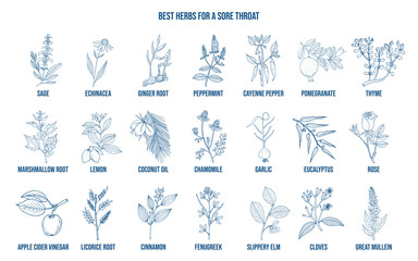 Best herbs for a sore throat