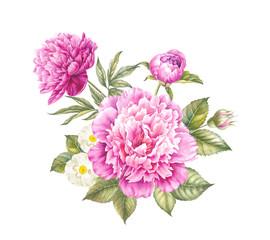 Pink peony flower. Watercolor illustration. Botanical design.
