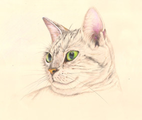 Cat in colored pencils