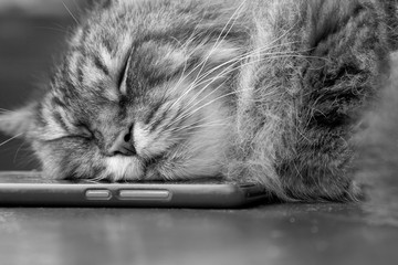the cat is sleeping on the phone