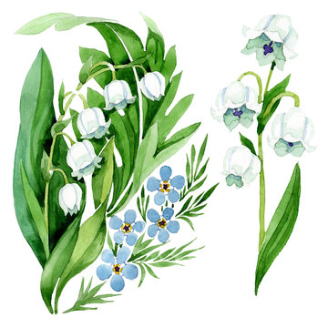 Forget me not and lily of the valley floral botanical flowers. Watercolor background illustration set.