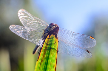 Beautiful dragonfly on the grass