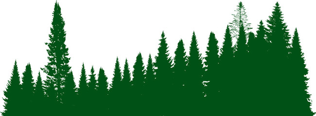 green fir forest isolated on white