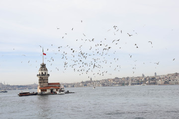 The most beautiful city of the east, an image from Istanbul. historic sites and seagulls