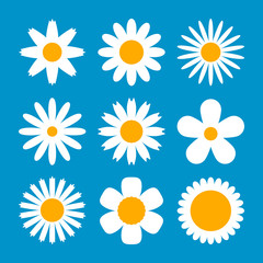 Large set of various white flowers in daisy style. Flower collection for different holiday decor. flat vector illustration isolated