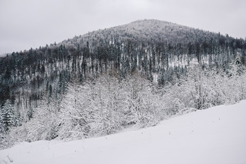 Fototapete - Scenic snow covered forest and hill in winter