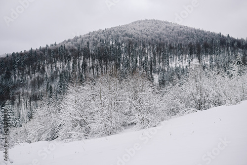 Fototapete Scenic snow covered forest and hill in winter