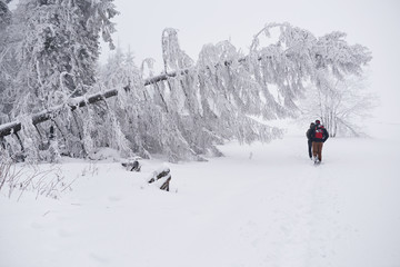 Fototapete - Couple hiking along a snowy forest trail in the wintertime