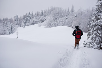 Fototapete - Hiker walking along a snow covered forest path in winter