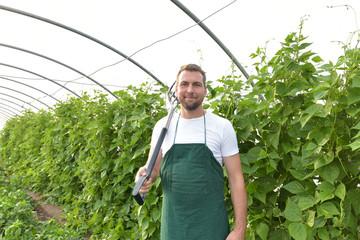 Anbau von Gemüse in einer Gärtnerei - Landwirt im Gewächshaus bei der Arbeit  // Growing vegetables in a nursery - farmer in the greenhouse at work