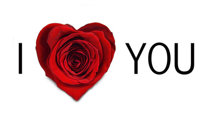 I love you message. Valentines day rose